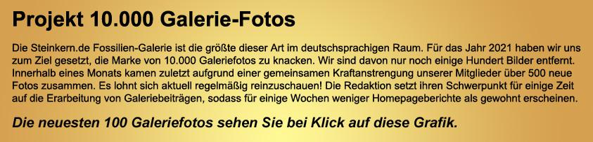 Steinkern.de Galerie - die letzten 100 Beiträge