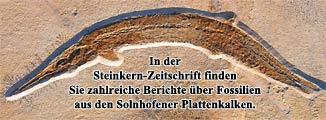 Banner - Solnhofener Plattenkalke
