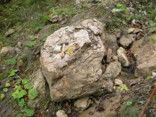 Bild_6_Fossilschicht_viel_zu_gro__223_.jpg