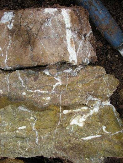 die fossilien community fossilien sammeln im untersten lias des. Black Bedroom Furniture Sets. Home Design Ideas