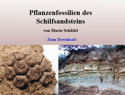 flora_des_schilfsandsteins_download.jpg