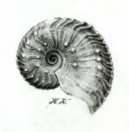 034HK_Ammonit_Zigzagzone_Gammelshausen_k.jpg