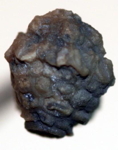 Pyxidocrinus pruemiensis