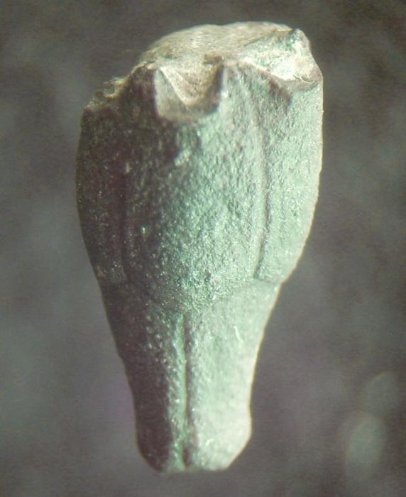 Storthingocrinus wotanicus