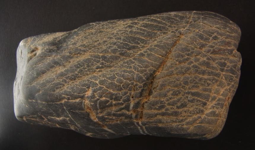 Prototaxites loganii (DAWSON 1859)