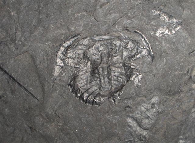 05 - Fossil des Monats Mai 2006