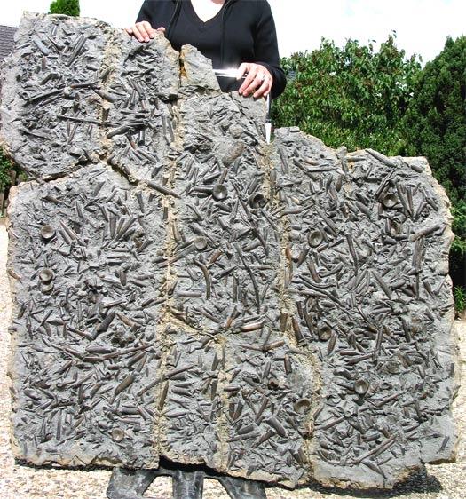 08 - Fossil des Monats August 2006
