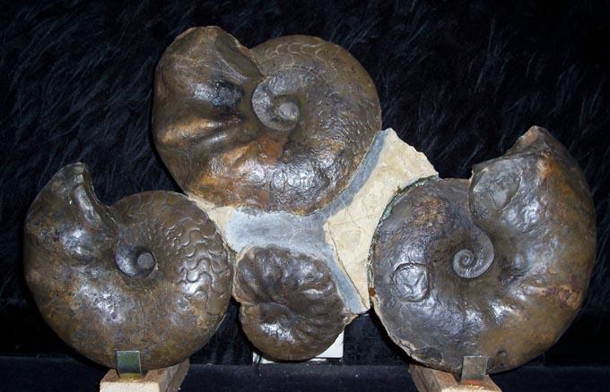03 - Fossil des Monats März 2006