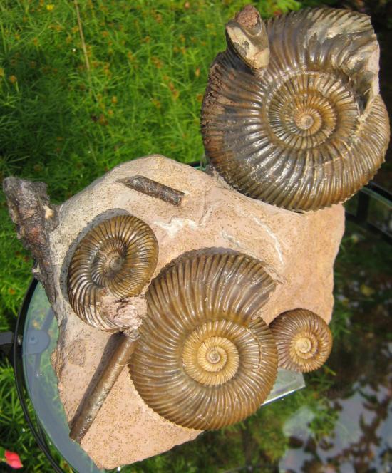 08 - Fossil des Monats August 2007