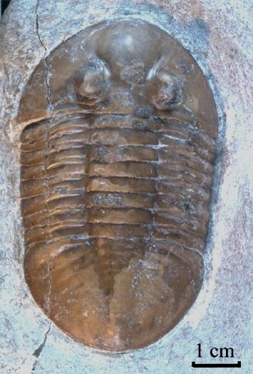 10 - Fossil des Monats Oktober 2008