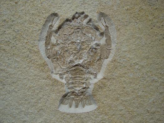 09 - Fossil des Monats September 2011