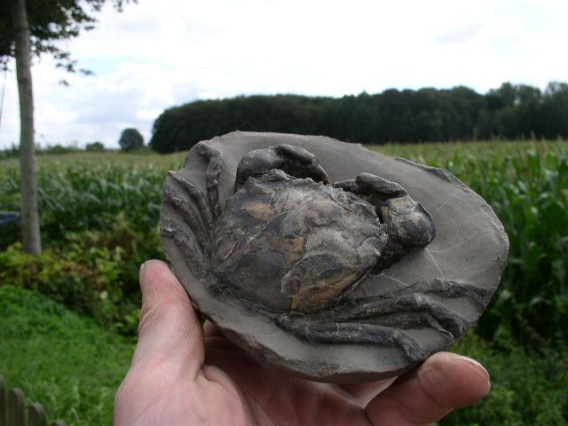 09 - Fossil des Monats September 2012