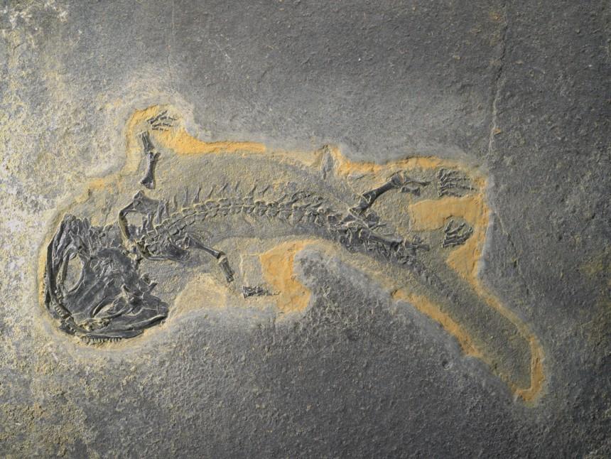 12 - Fossil des Monats Dezember 2015