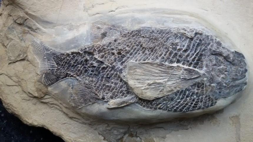 06 - Fossil des Monats Juni 2018