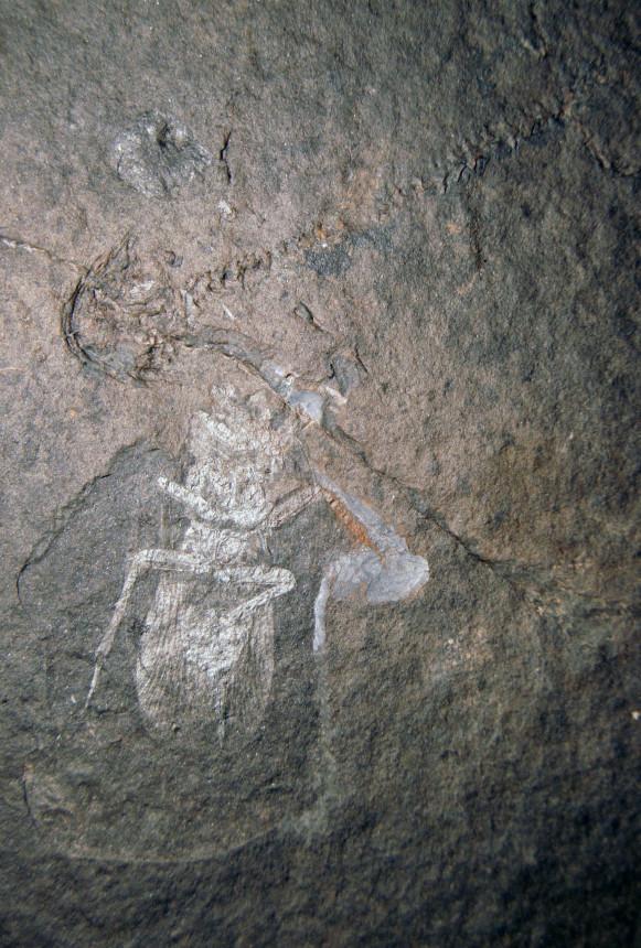 02 - Fossil des Monats Februar 2020