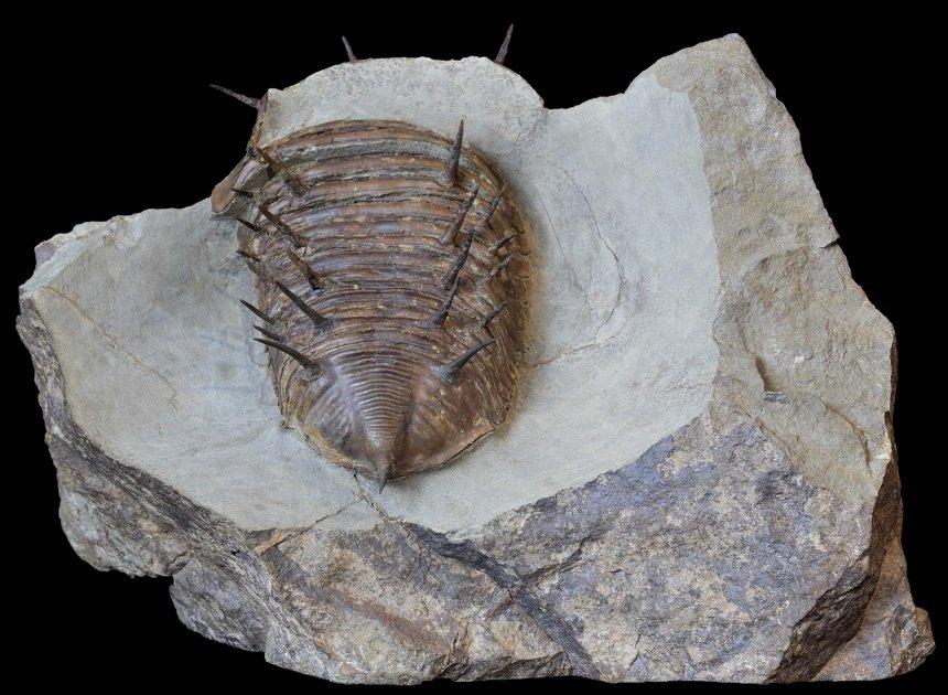 09 - Fossil des Monats September 2020