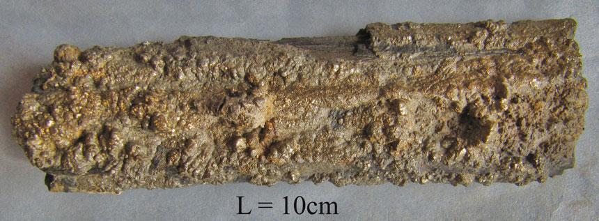 Pyritisiertes Holz