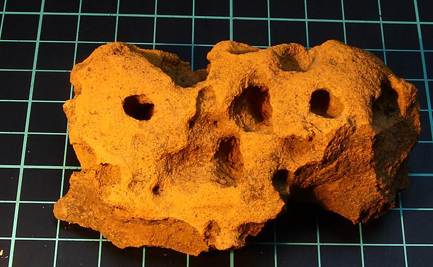 Sandstein mit Bohrmuschellöchern