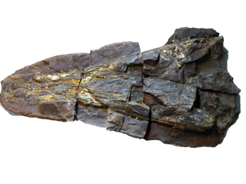 Archegosaurus decheni Goldfuss, 1847