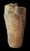 Crinoide Bactrocrinites fusiformis (ROEMER, 1844)