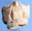 Megaradialocrinus brevis