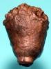 Megaradialocrinus elongatus