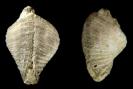 Sonstige Fossilien