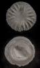 Koralle Microcyclus thedfordensis BASSLER