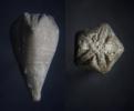 Blastoidea Heteroschisma subtruncatum (Hall, 1858)