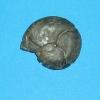 Cheilocreas verneuili (MÜNSTER)