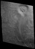 Taxocrinus stuertzi