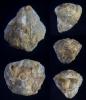 Brachiopode Cyrtina intermedia (OEHLERT 1887),