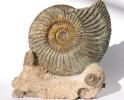 09 - Fossil des Monats September 2005