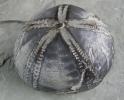 06 - Fossil des Monats Juni 2007