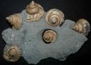 04 - Fossil des Monats April 2008