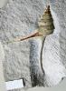 03 - Fossil des Monats März 2009