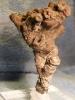 11 - Fossil des Monats November 2009