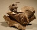 01 - Fossil des Monats Januar 2009
