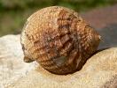06 - Fossil des Monats Juni 2010