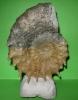 09 - Fossil des Monats September 2010