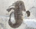 11 - Fossil des Monats November 2012