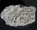 03 - Fossil des Monats März 2013