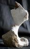02 - Fossil des Monats Februar 2014