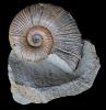 06 - Fossil des Monats Juni 2014