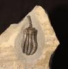 08 - Fossil des Monats August 2014