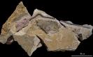 02 - Fossil des Monats Februar 2016