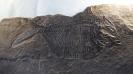 05 - Fossil des Monats Mai 2016