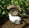 09 - Fossil des Monats September 2016