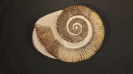 02 - Fossil des Monats Februar 2017