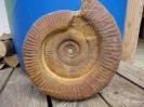 06 - Fossil des Monats Juni 2017